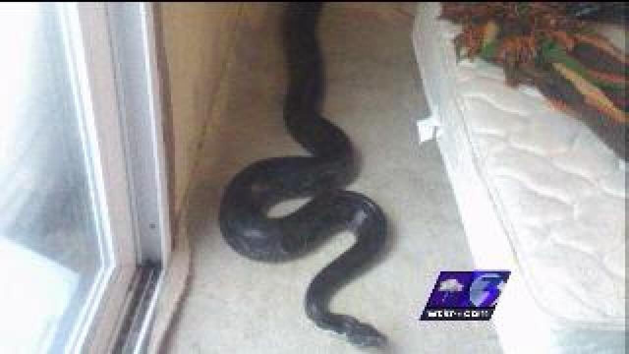Owner of missing python blames tenant for disappearance