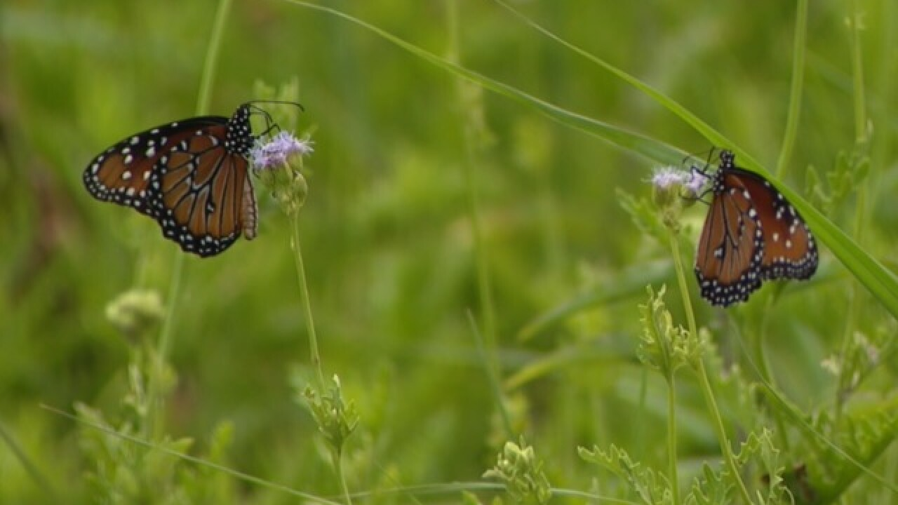 Texas butterfly center files lawsuit to stop construction of US-Mexico border wall