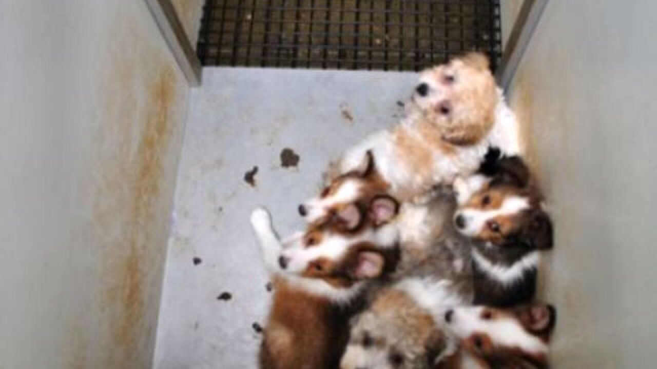 Four Indiana dog breeders on list of 'Horrible Hundred' puppy mills