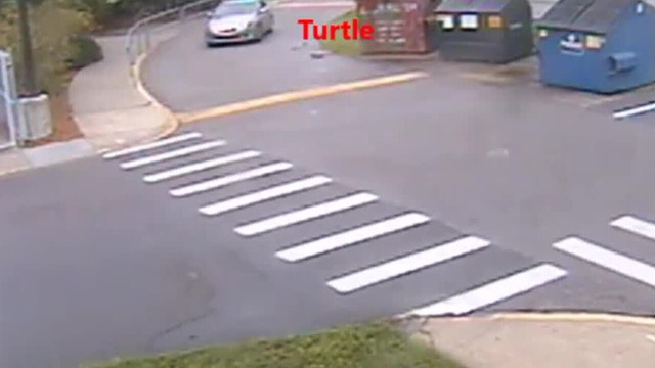 Driver who hit tortoise won't be charged