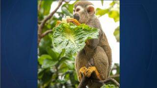 wptv monkey.jpg