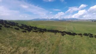 Montana Ag Network: Ranchers improve soil health