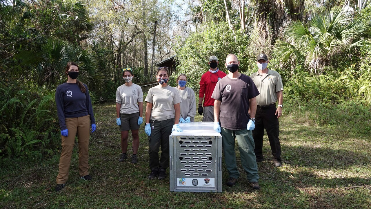 FWC and Naples Zoo panther release