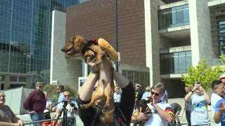 Cincinnati opens its Oktoberfest with adorable wiener dog race