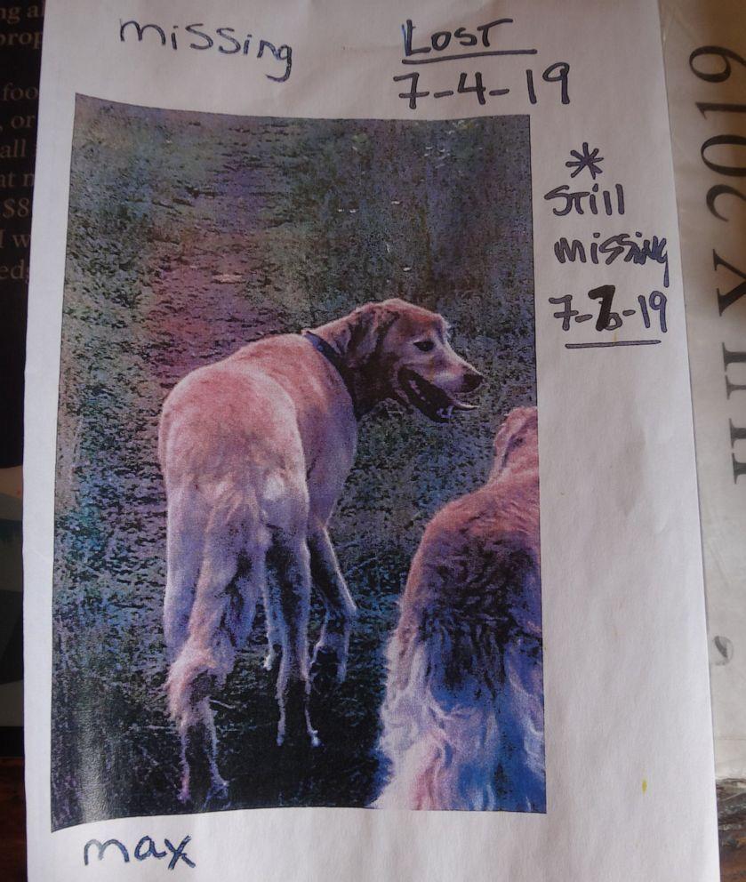 lost-dog-04-as-ht-190725_hpEmbed_11x13_992.jpg