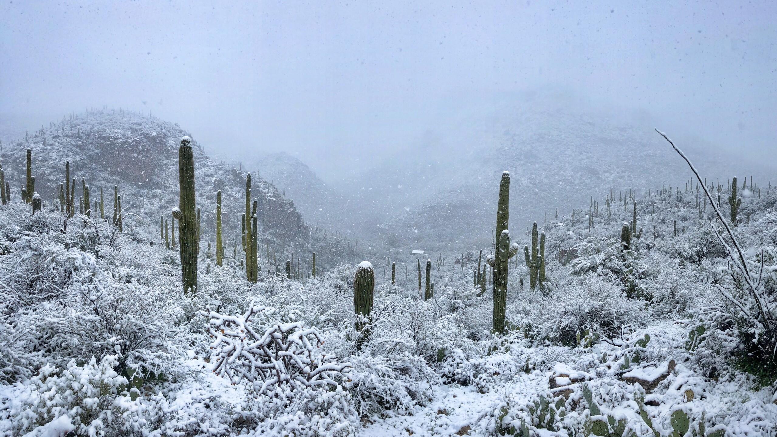 joseph-cyr-this-morning-around-Sabino-Canyon-5.jpg
