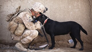 WCPO_soldier_generic_kissing_dog.jpg