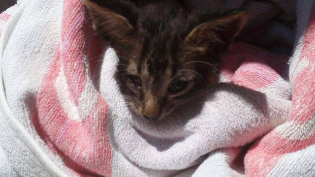 Italian sailor saves drowned kitten with mouth-to-mouth