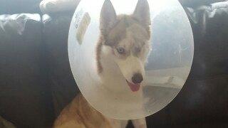 Search warrant served in Oceanside dog torture