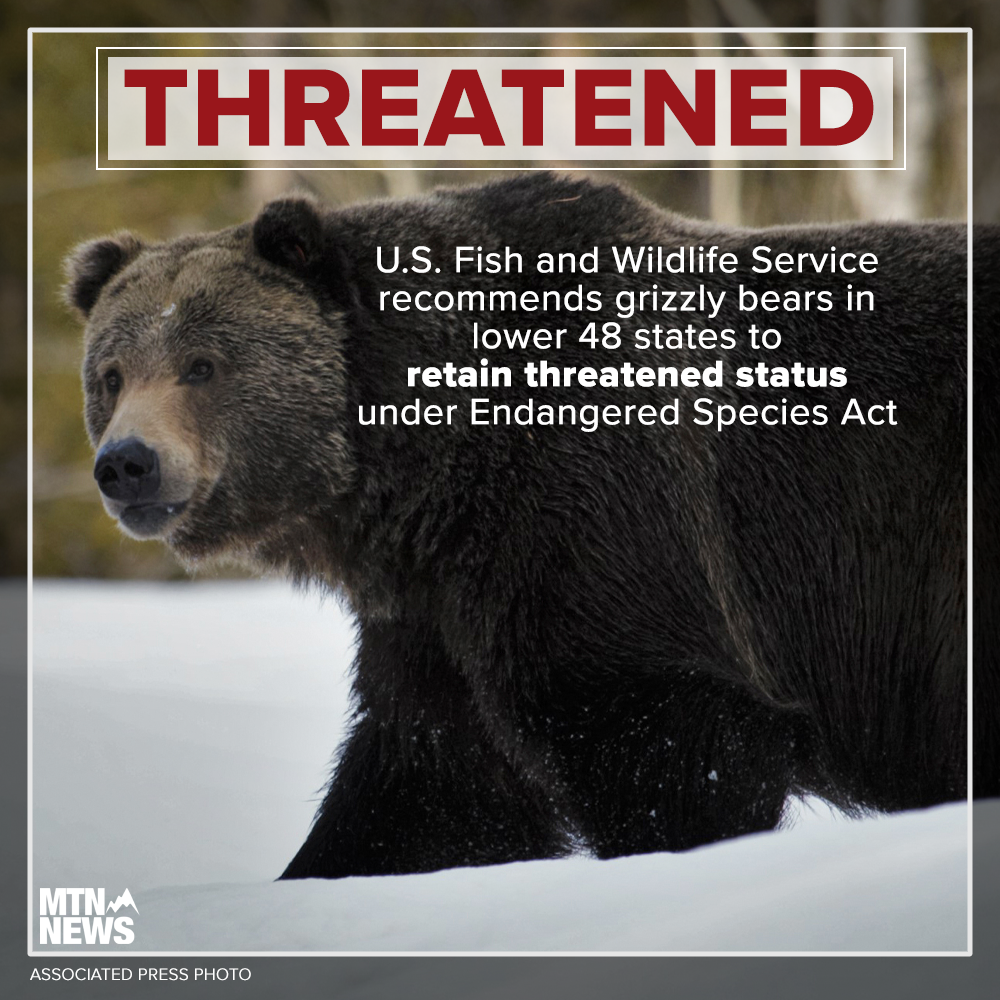 Fish and Wildlife Service says grizzly populations in Montana are biologically recovered but should retain protected status