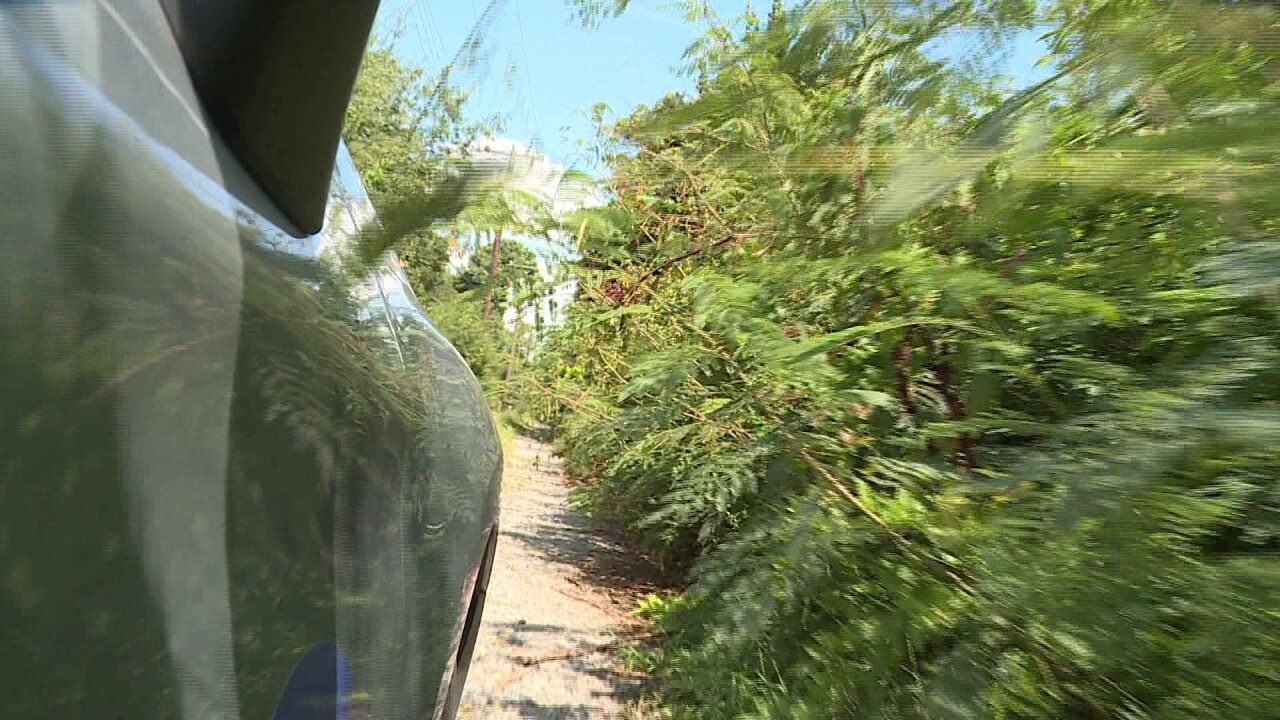 Amputee pleads for help with overgrown alley for second time in 2years