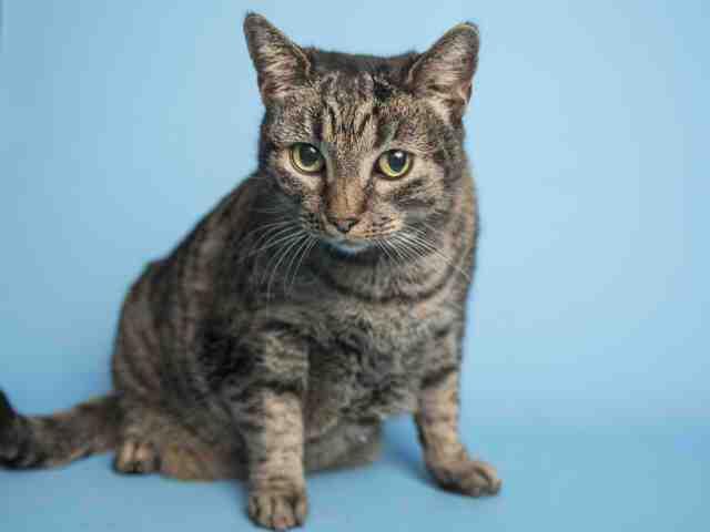 Adoptable pets from Arizona Humane Society and Maricopa County Animal Care (4/18)