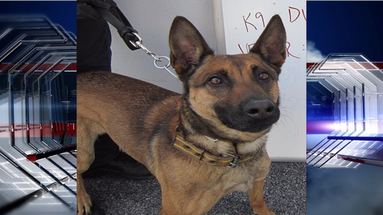 CBP searching for K9 Dunja after he went missing near Papago Farms