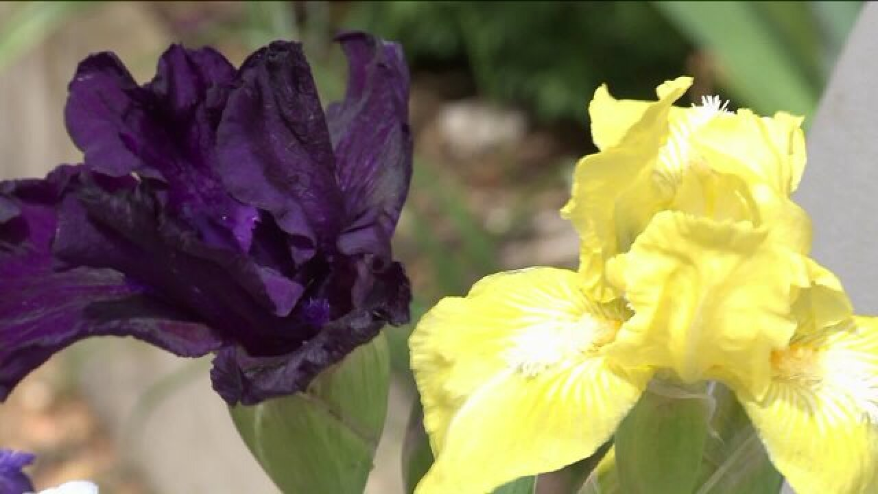 Irises are in peak bloom just in time for Maymont's Herbs Galore &More