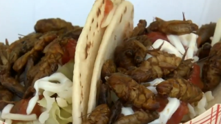 Bug tacos at the 2019 Wisconsin State Fair