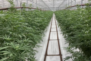 Florida representatives prepare for the possibility of recreational weed