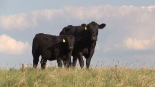 Montana Ag Network: Local Beef - It's What's for Lunch