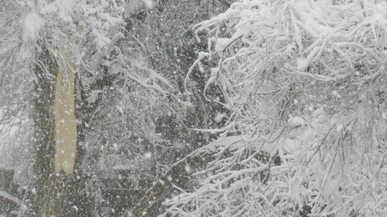 How to protect and repair snow-damaged trees