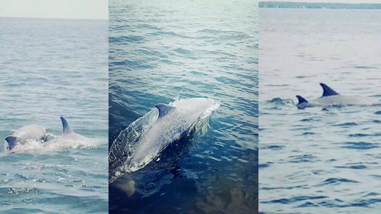 'Look how many!' Family captures incredible video ofdolphins