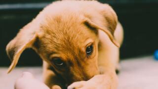 animal-blur-close-up-840326.jpg