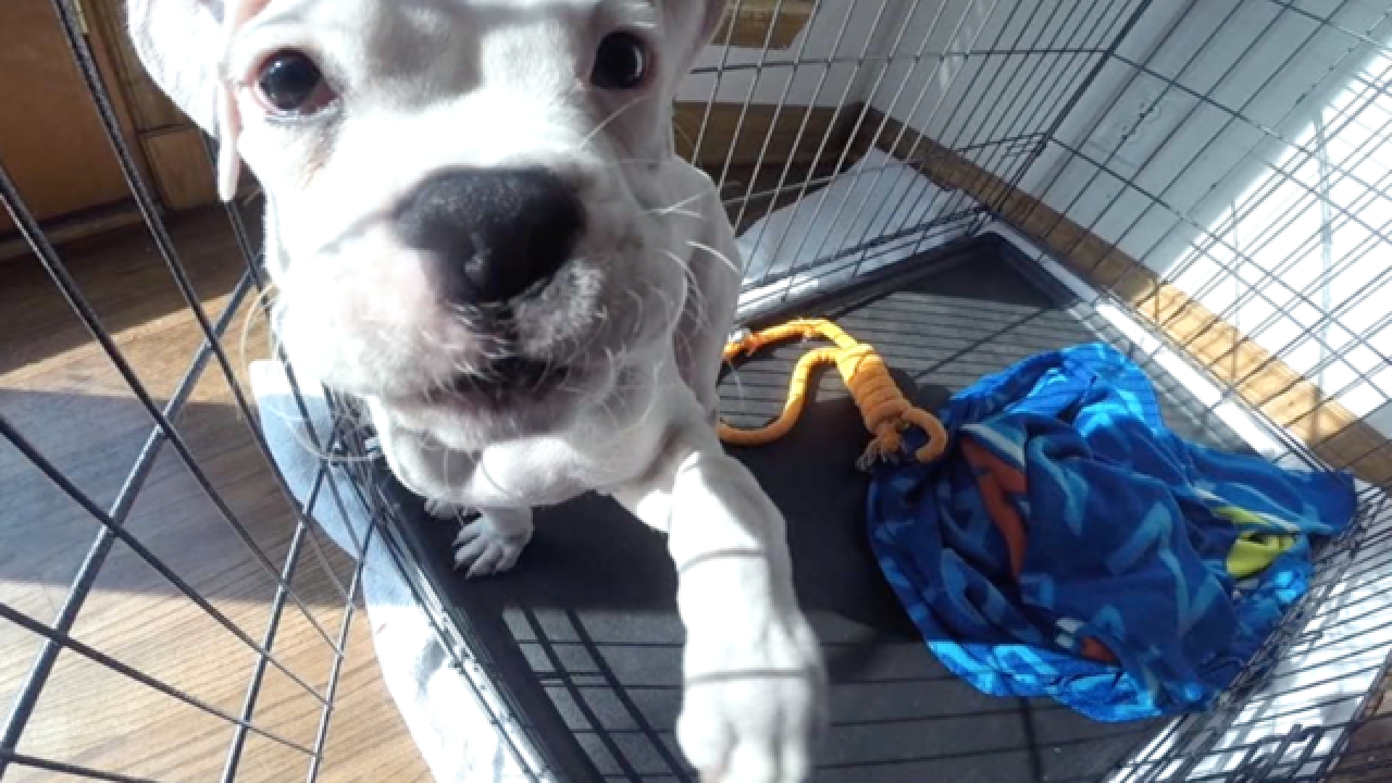 UPDATE: Pet store changes after skinny pup found