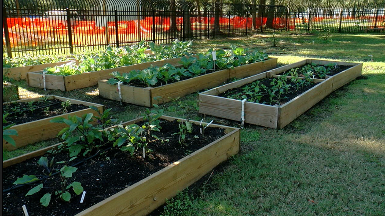 Thieves-targeting-free-garden-in-Tampa's-University-area.png