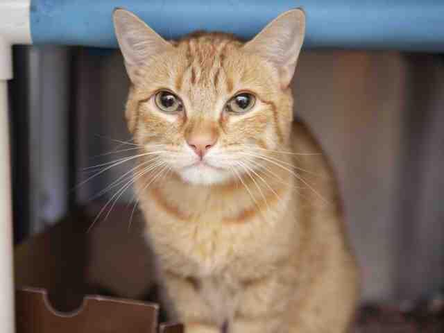 Adoptable pets from Arizona Humane Society and Maricopa County Animal Care (7/11/18)