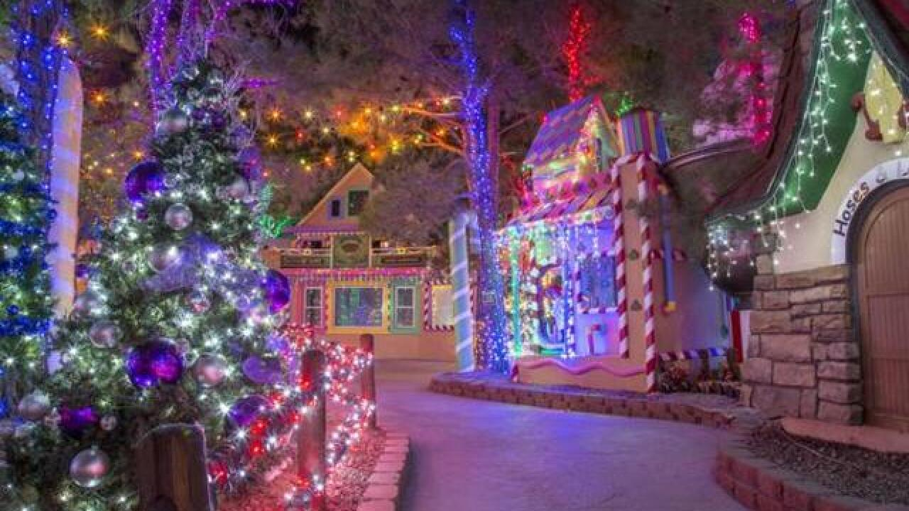 Magical Forest opens with tree lighting