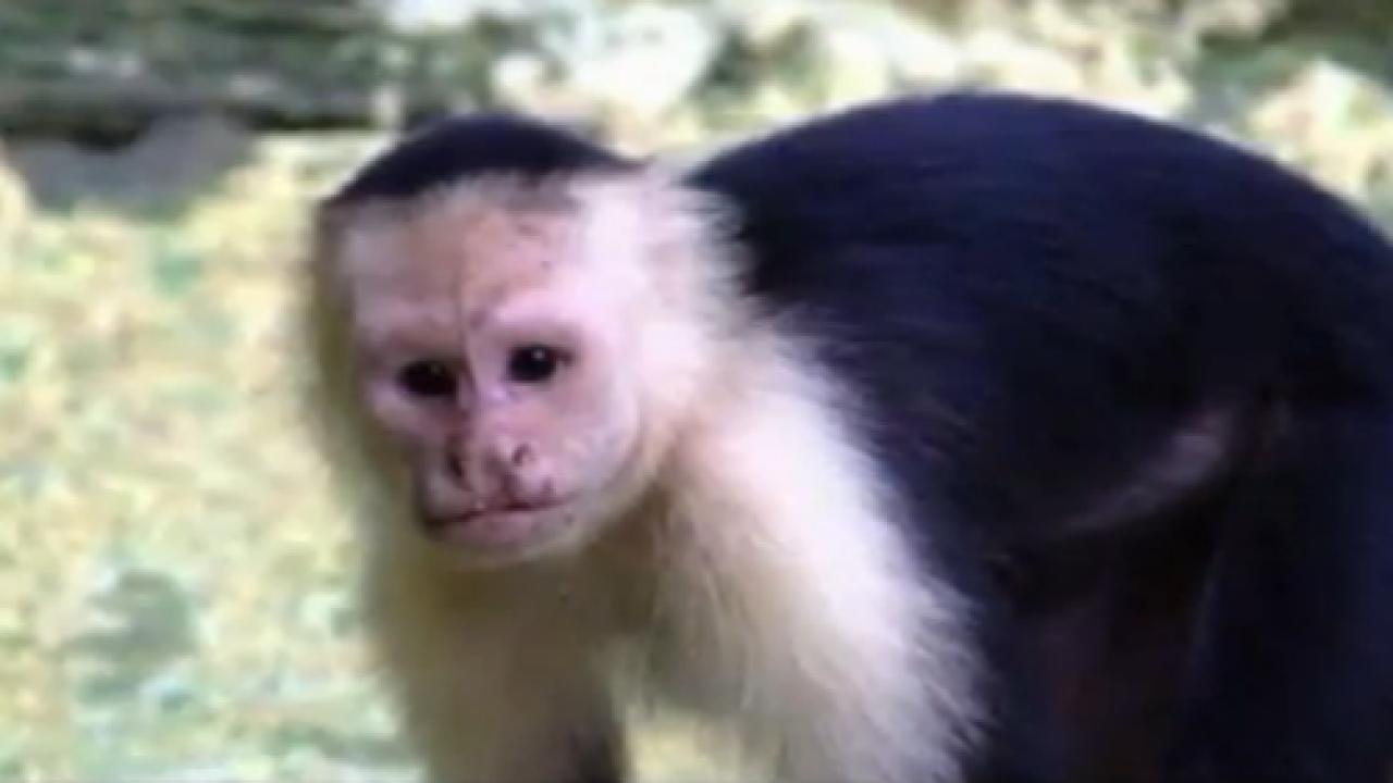 Monkey bites child at Virginia BeachOceanfront