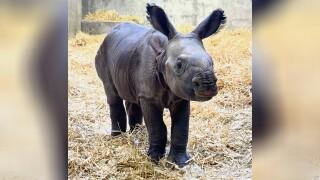 Denver Zoo baby rhino.jpg