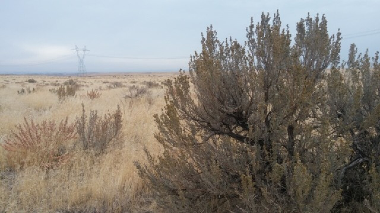 Officials: Efforts failing to save U.S. sagebrush land
