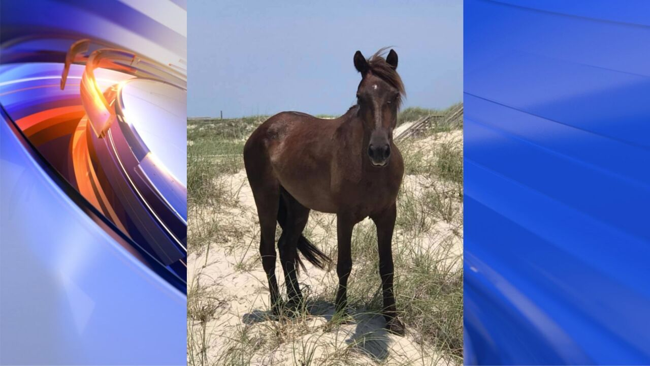 Corolla Wild Horse Fund announces death of beloved horse