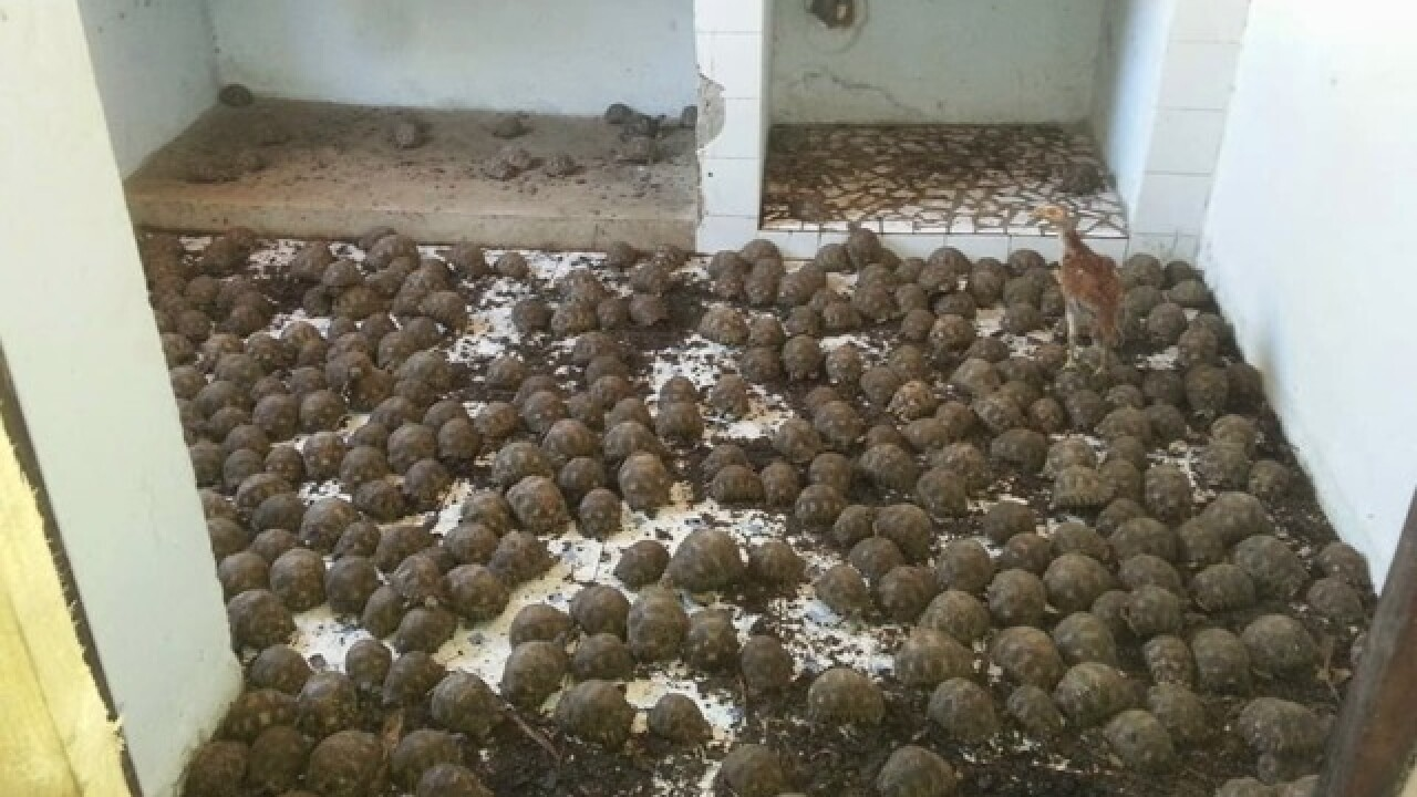 SD Zoo to help 11K tortoises found in bust
