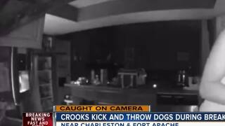 Crooks kick and throw dogs during break-in