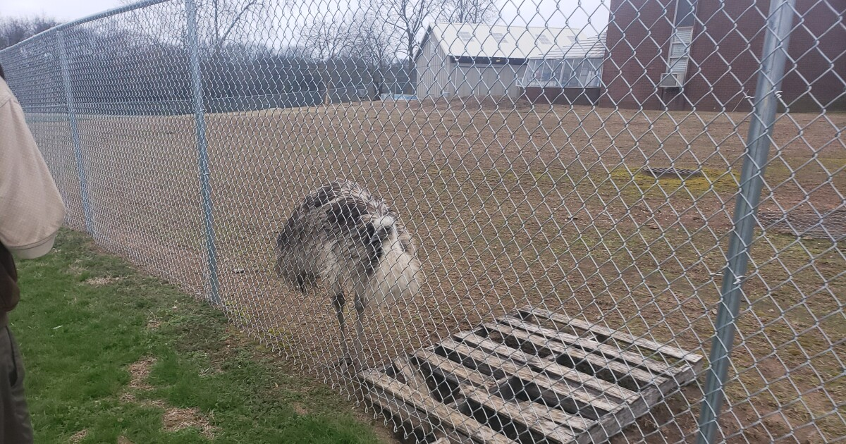 Family outraged after McGavock High School emu dies