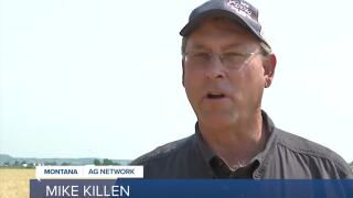 Montana Ag Network: Molson Coors Ready for Harvest