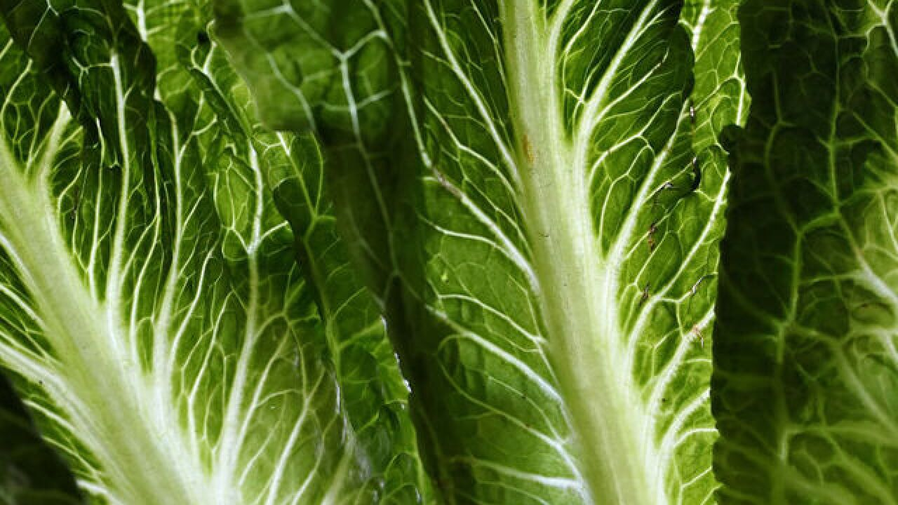 Deadly E. coli outbreak in lettuce traced to contaminated water