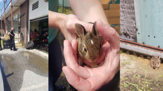 Baltimore County Police rescue trapped baby bunnies