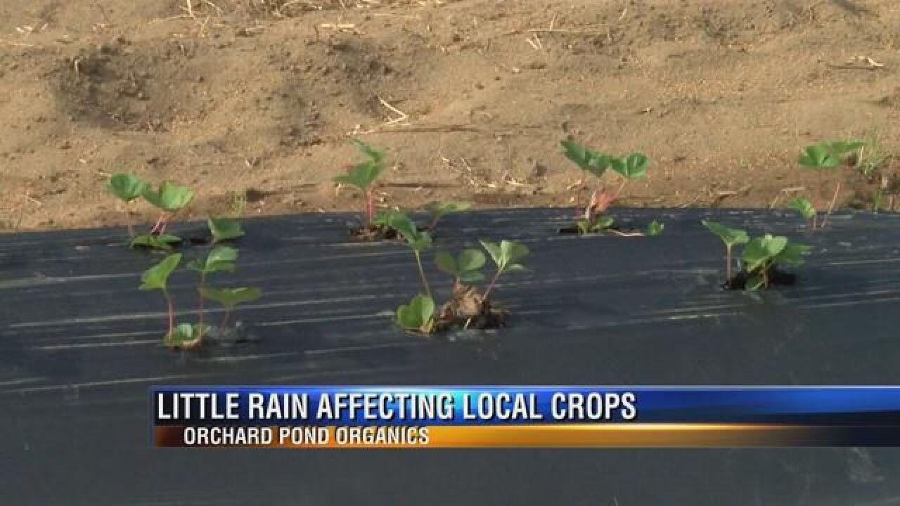Local Farmers Celebrate Overnight Rain, Hope for More