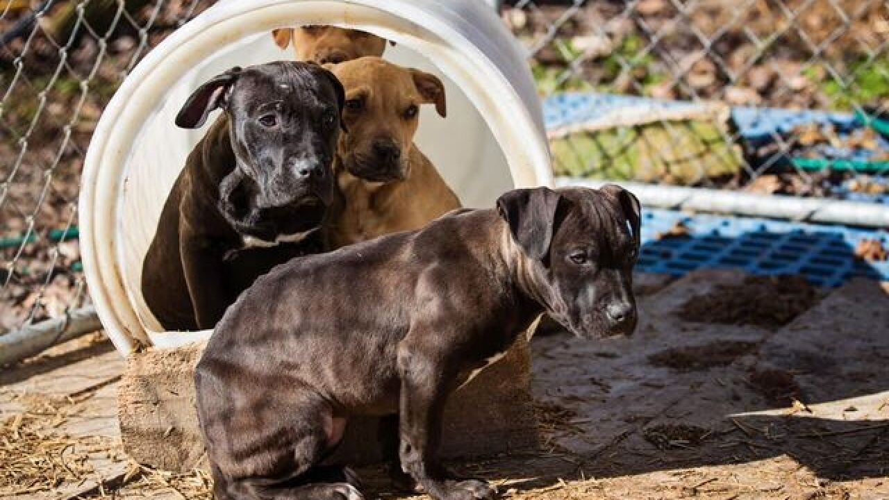 Rescue Corps Shelter Seeks Donations