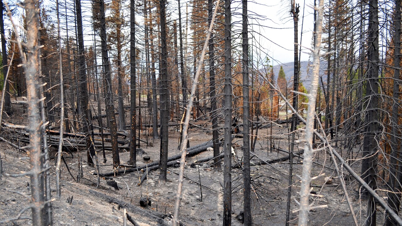 Burn scar from East Troublesome Fire_May 2021