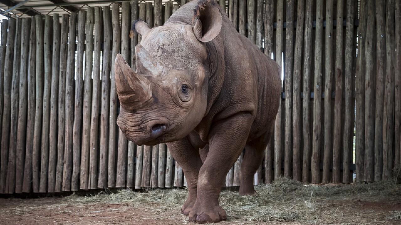 San Diego Zoo rhino given new home in Tanzania