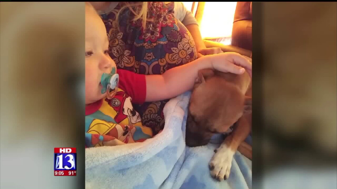Ogden family warns about parvo after adopted puppy dies; rescue responds