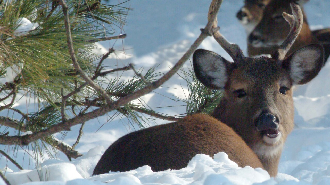 State: Hunters harvest more than 172,000 deer for 2018-2019