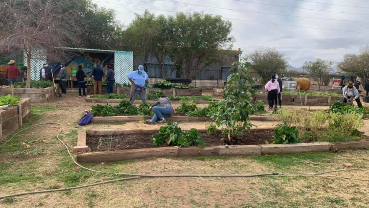 TigerMountain Foundation community garden