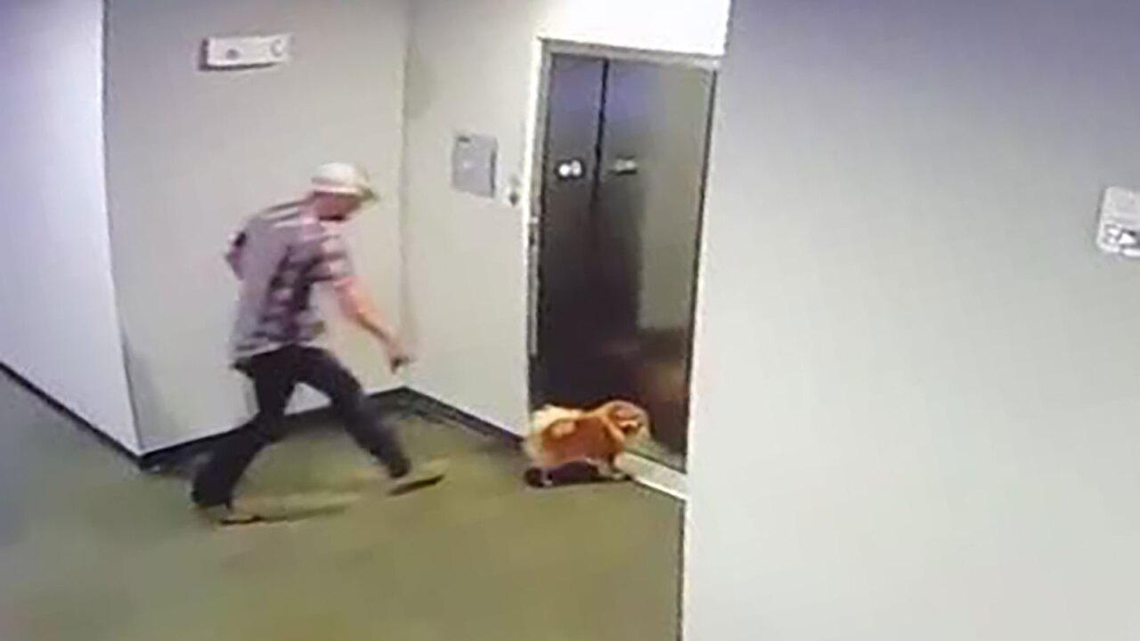 Video shows a man rescuing neighbor's dog after its leash got stuck in elevator doors