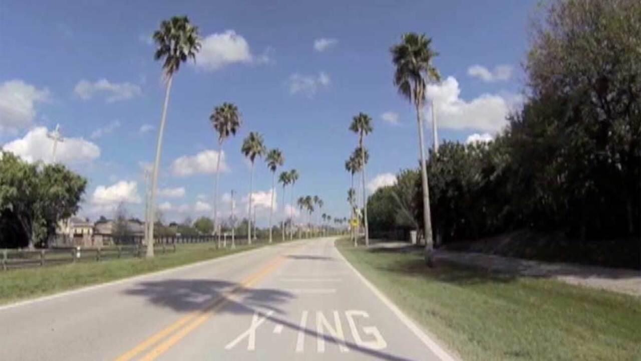 Palm trees that line Aero Club Drive