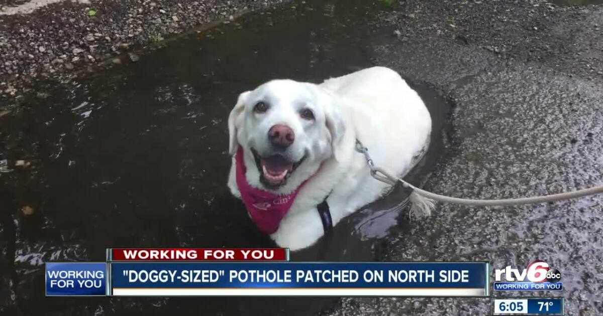 Pothole that was big enough for a dog is now patched