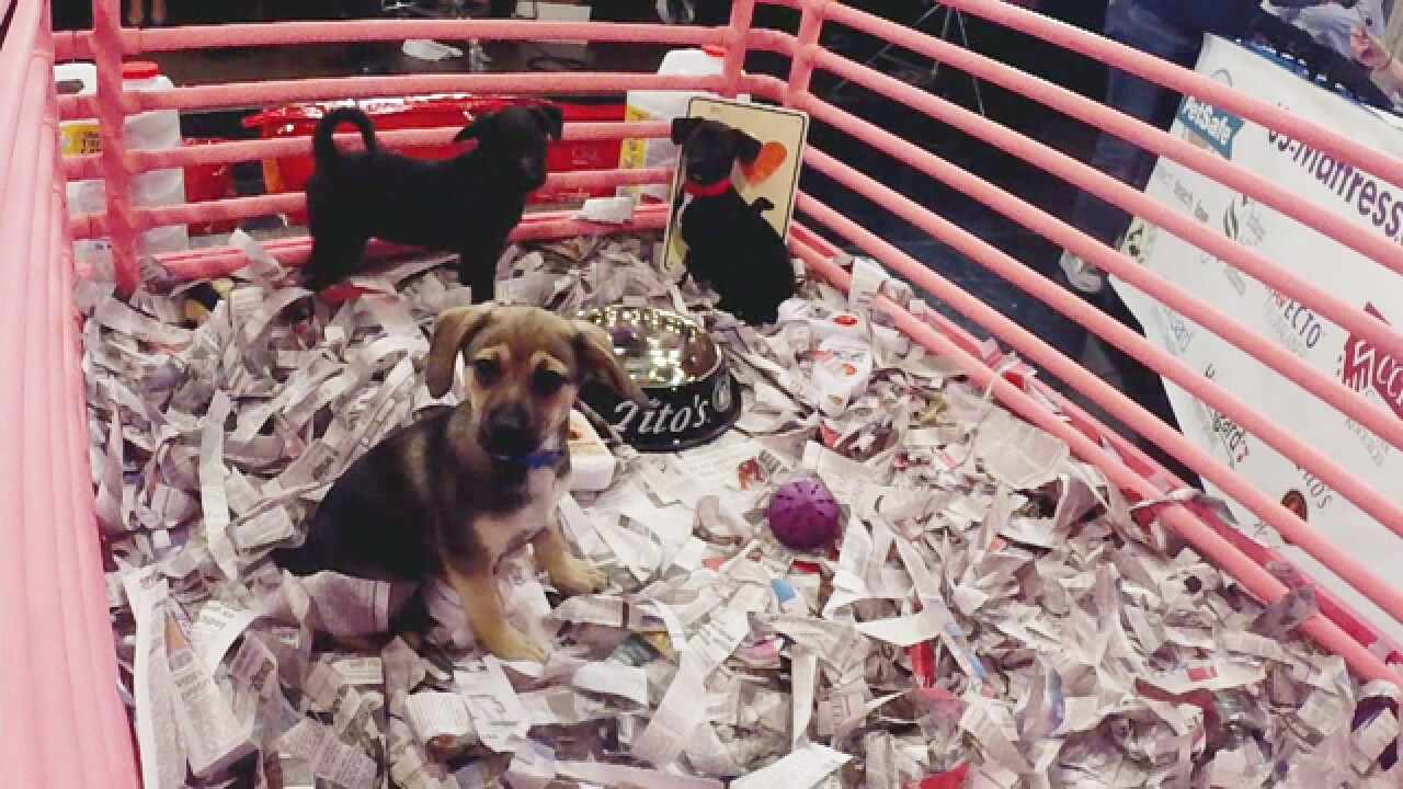 PUPPY CAM: In celebration of National Dog Day, watch these puppies play