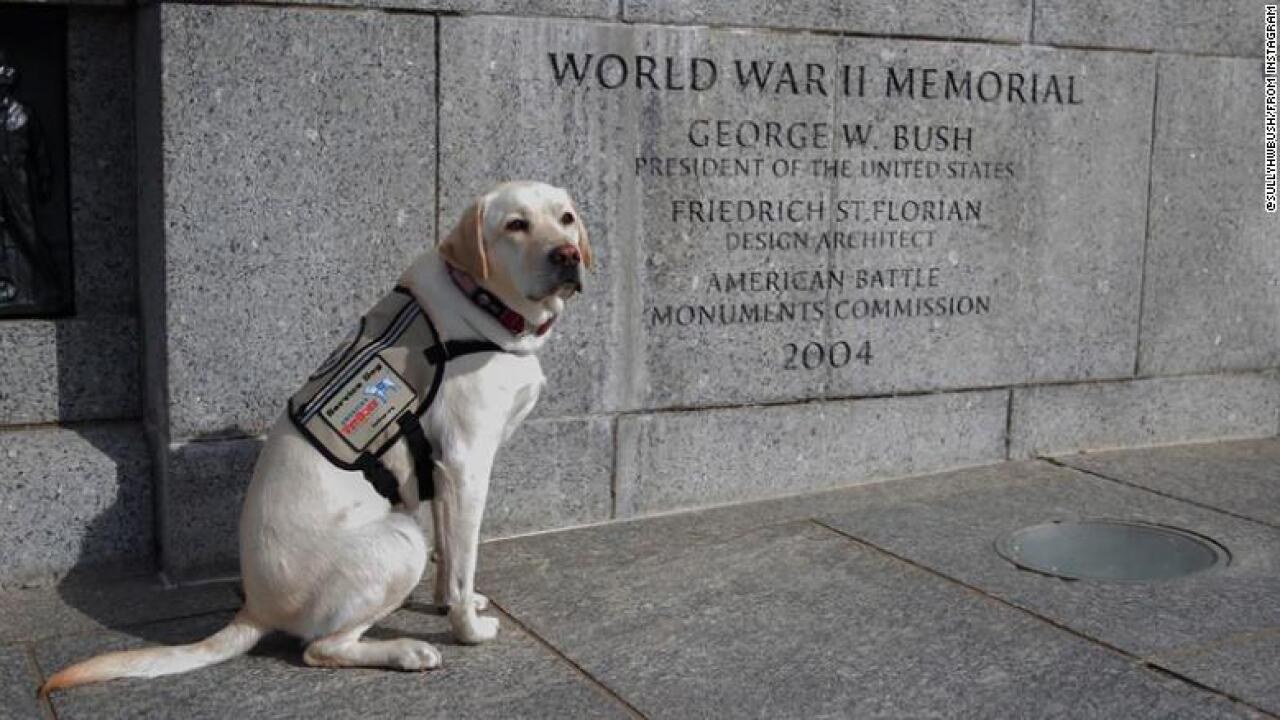 Sully the service dog honors his late friend George H.W. Bush with a beautiful message